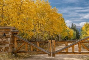 yellow aspen thru a gate by I-Taylor